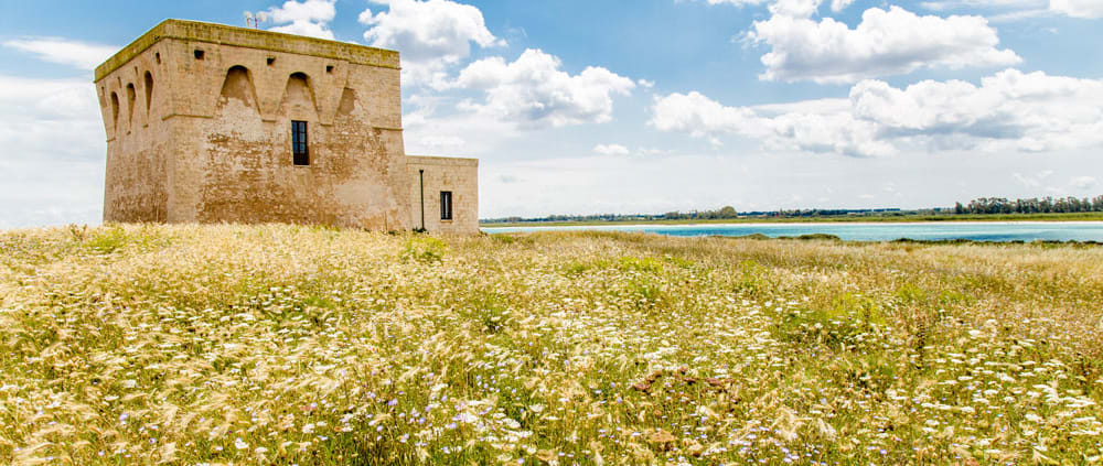 Discovering Torre Guaceto: wheat field