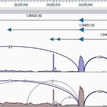 RNA-Seq Step 4