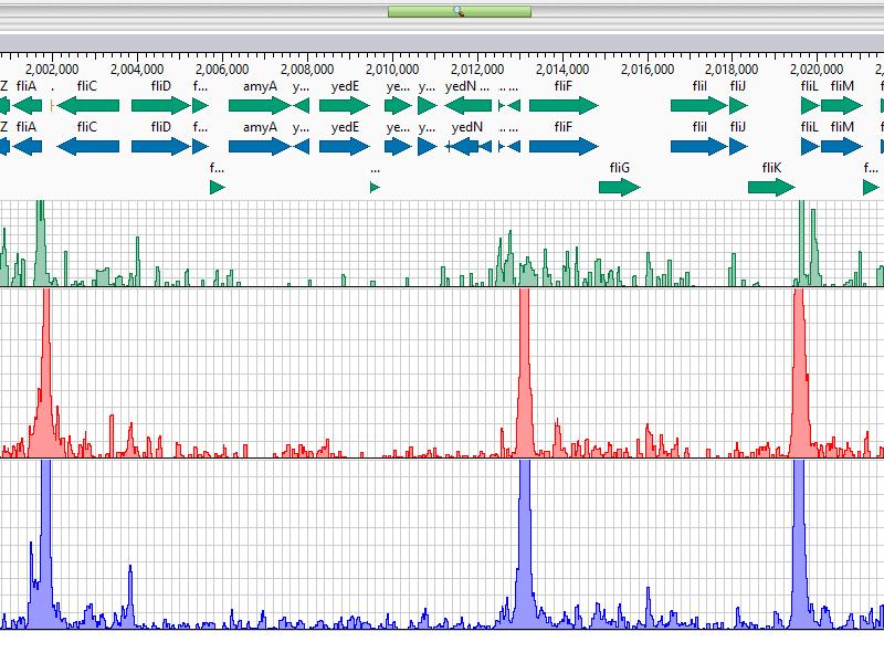 ChIP-Seq Peak Data Analysis