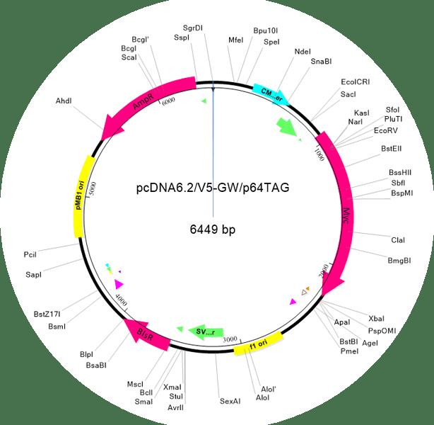 Plasmid Map