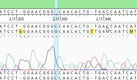 SeqMan Ultra Sanger Alignment