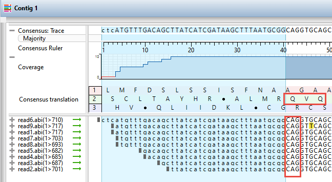 Trimming down to the target antibody translation sequence in SeqMan Ultra