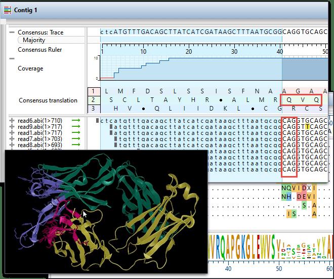 Antibody Phage Display