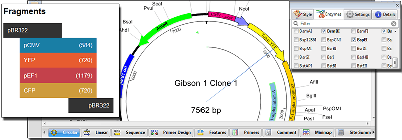 Virtual cloning is one of the workflows that can be done using the Molecular Biology Suite