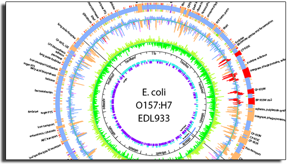 Section of an annotated E. coli genome in GenVision