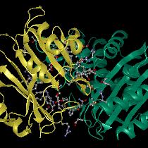 Protein Docking Step 3