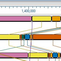 Mauve Genome Alignment Step 4