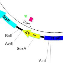 Plasmid Maps Step 4