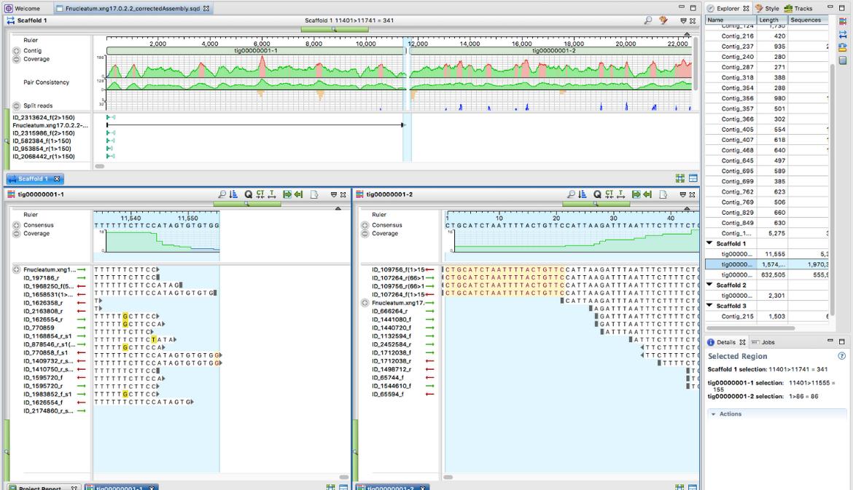 Genome Polishing Benchmarks: SeqMan NGen vs. Three Open-Source Tools