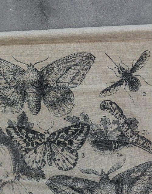 Schulkarte Insekten 59 x 95 cm detail 1