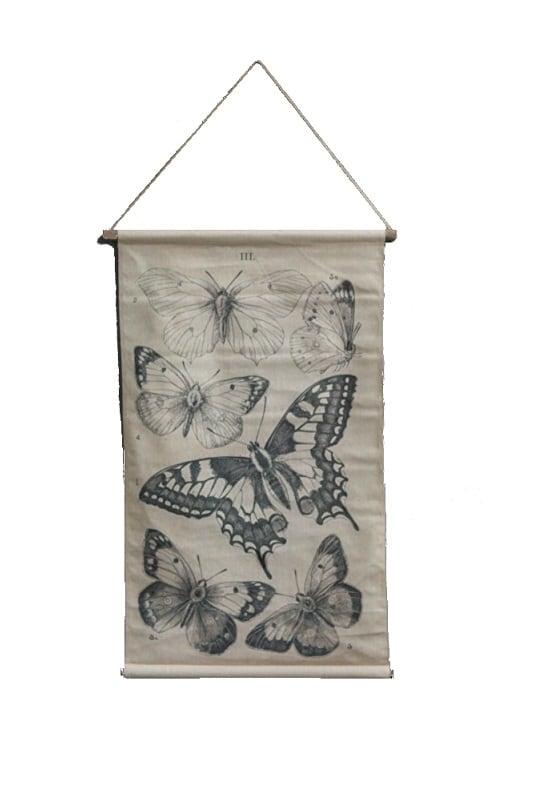 Schoolkaart vlinders 64 x 100 cm