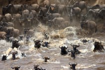 Great migration crossing there Mara river