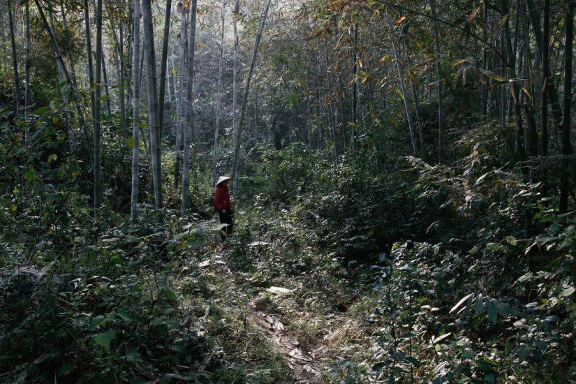 La guide. Pom Coong, Viet Nam. 2011