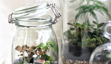 Build Your Own Glass Terrarium For Christmas Funzing