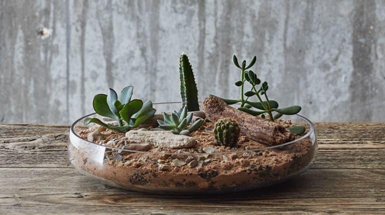 Craft Your Own Succulent Cactus Terrarium Workshop Funzing