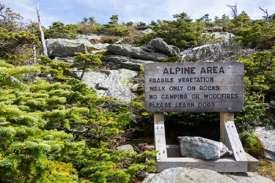 Alpin Zon