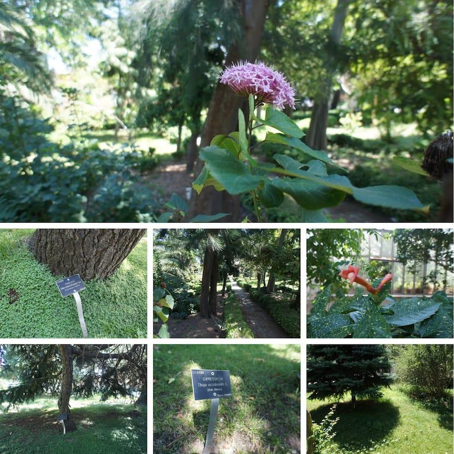 Alfred Heilbronn Botanik Bahçesi