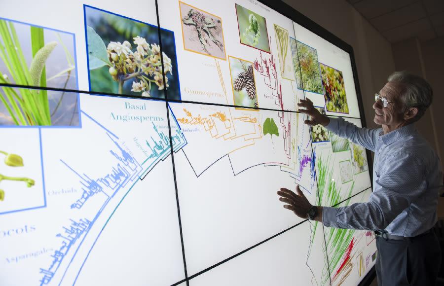 Bitkilerin Sınıflandırılması