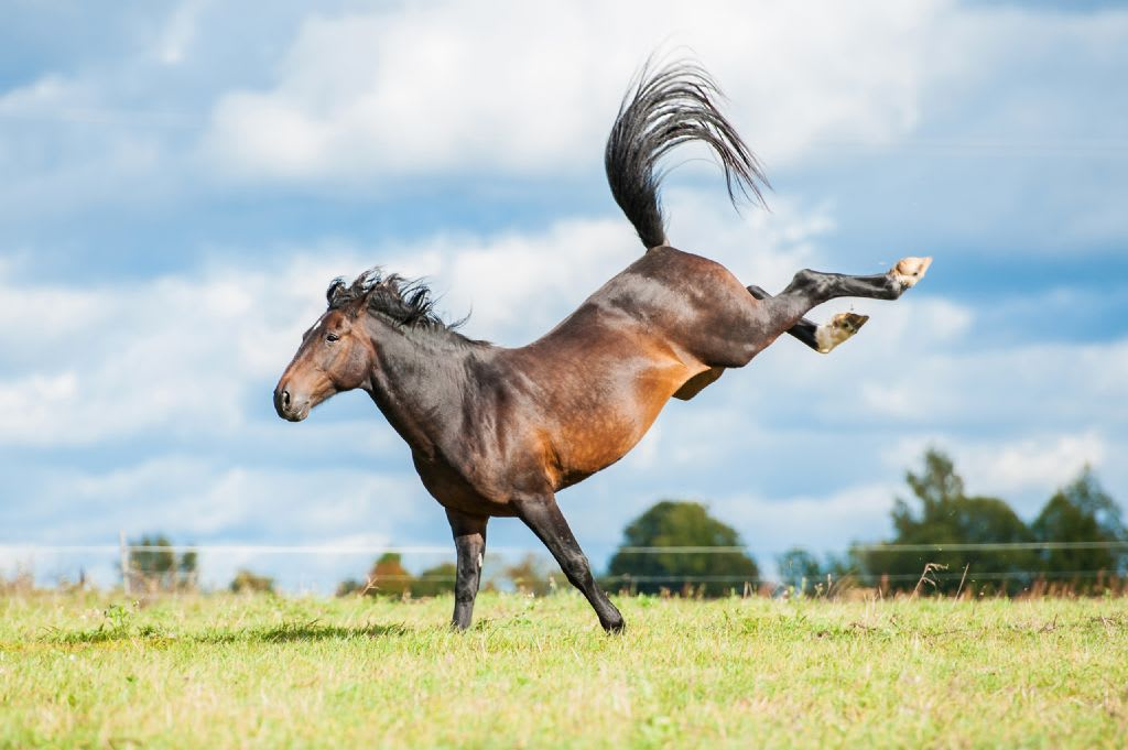 What Should You Feed A Senior Horse