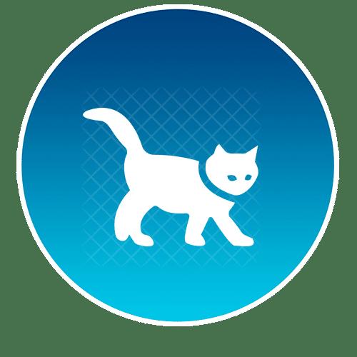 https://res.cloudinary.com/do1cewftm/images/f_auto,q_auto/v1620415798/cat/cat.png