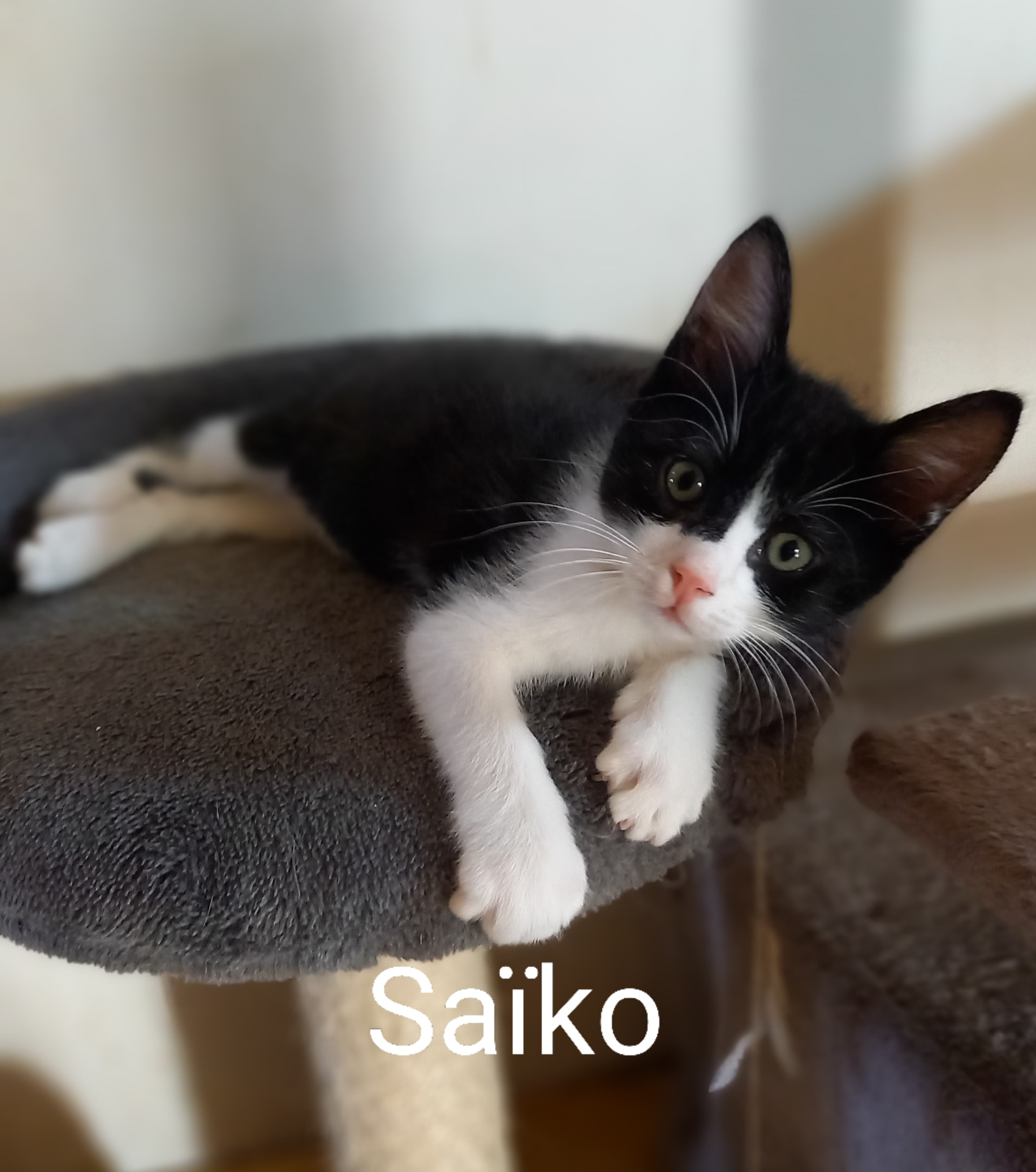 Saïko
