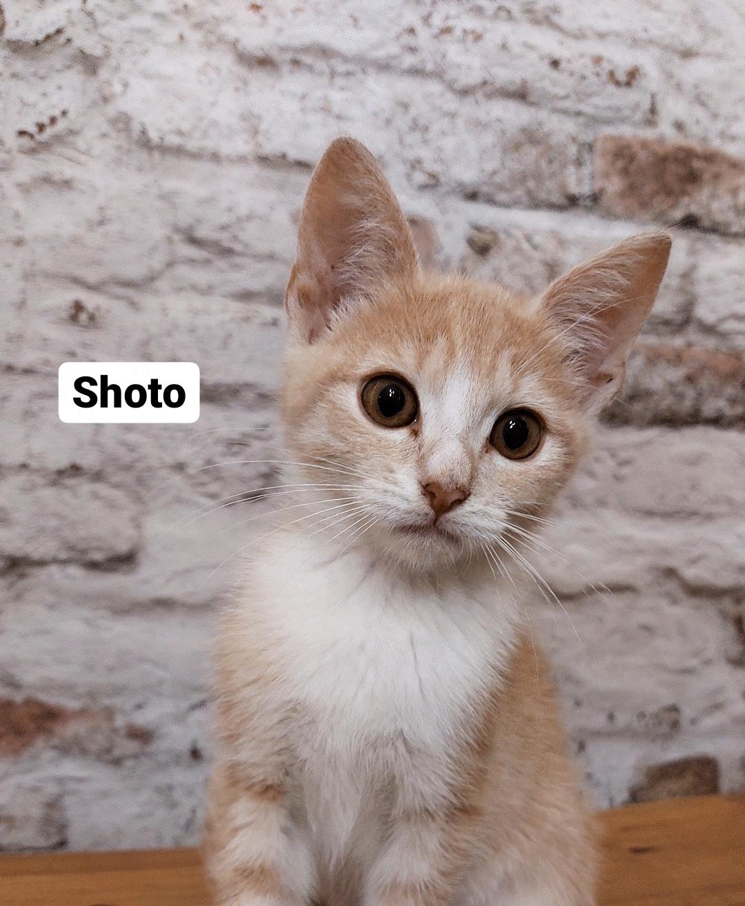 Shoto