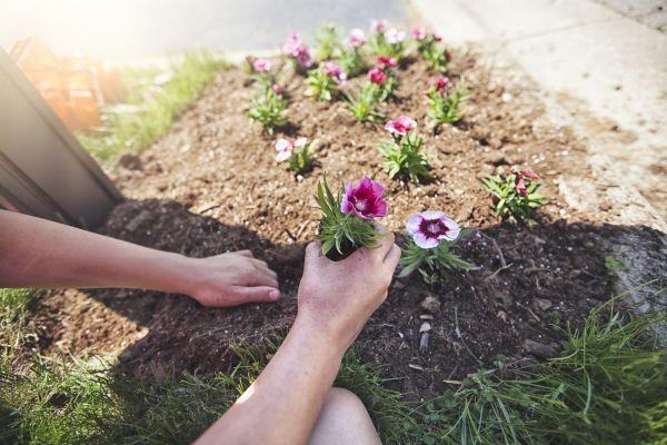 How Are Seedlings Similar?