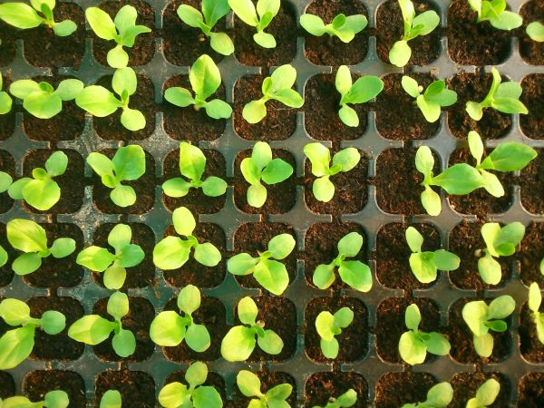 How Are Seedlings Different?
