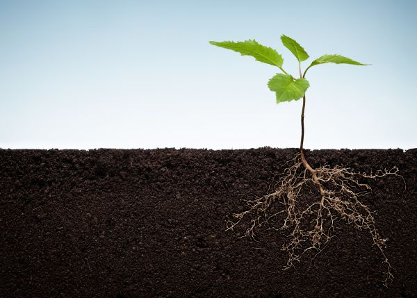 The Plant Problem