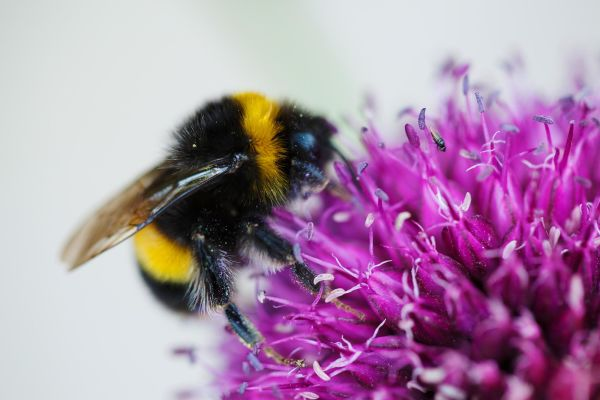 How can we design a garden that will help pollinators?