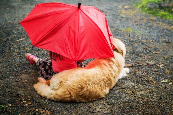 Don't Let Your Pet Get Wet