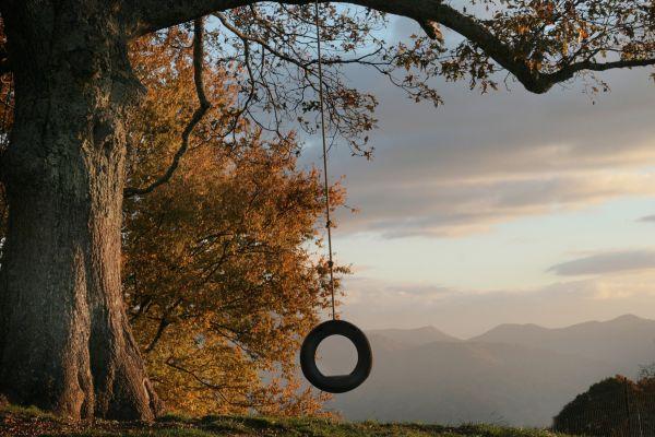 Swings in Motion