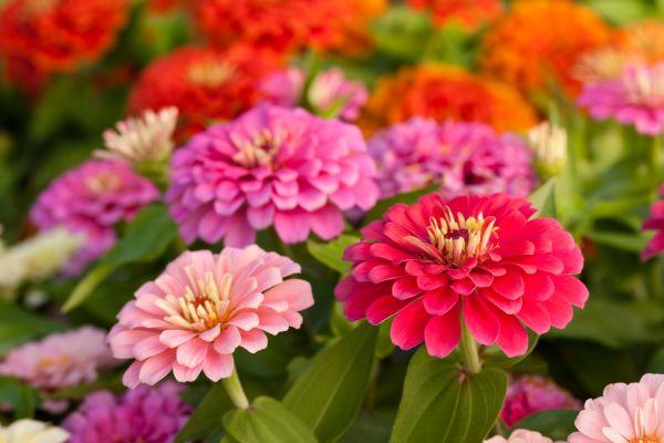 Flores fantásticas