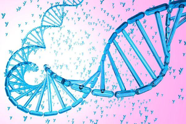 How do species reproduce?