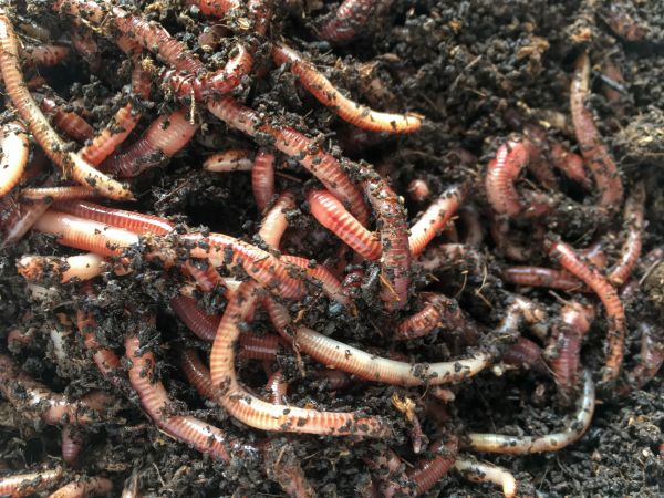 Earthworms Can!
