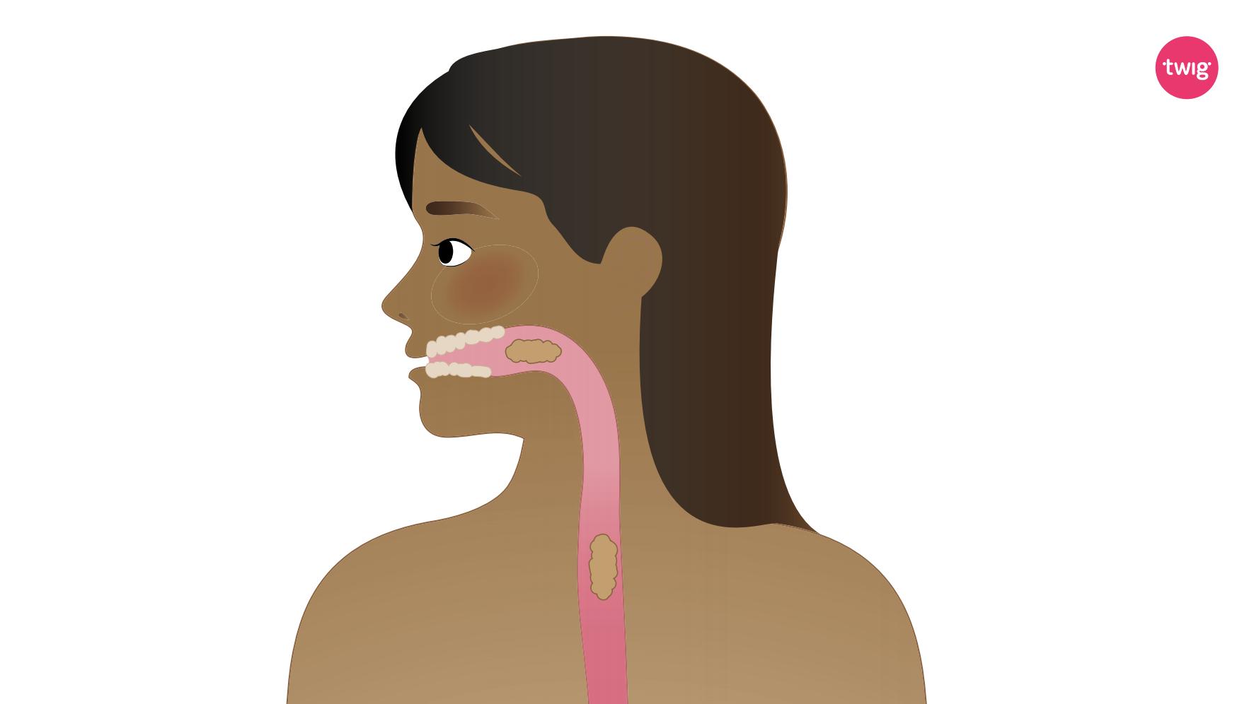 Digestion visual