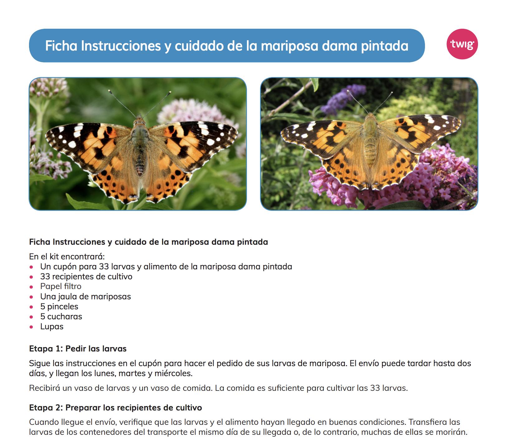 Ficha Instrucciones y cuidado de la mariposa dama pintada
