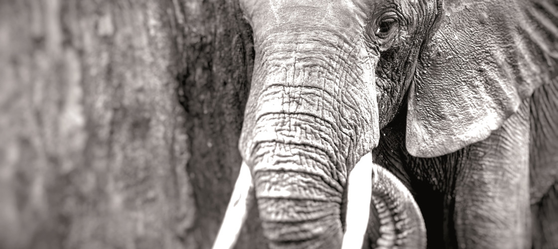 An ivory ban would not pose a significant threat to the profitability of the antiques market, writes Ow-en Paterson