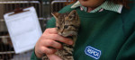 cat protection, rspca, animal cruelty, animal