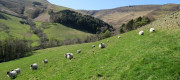 UK hill farming