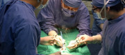 Vets perform an operation