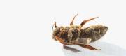 Dead queen bee