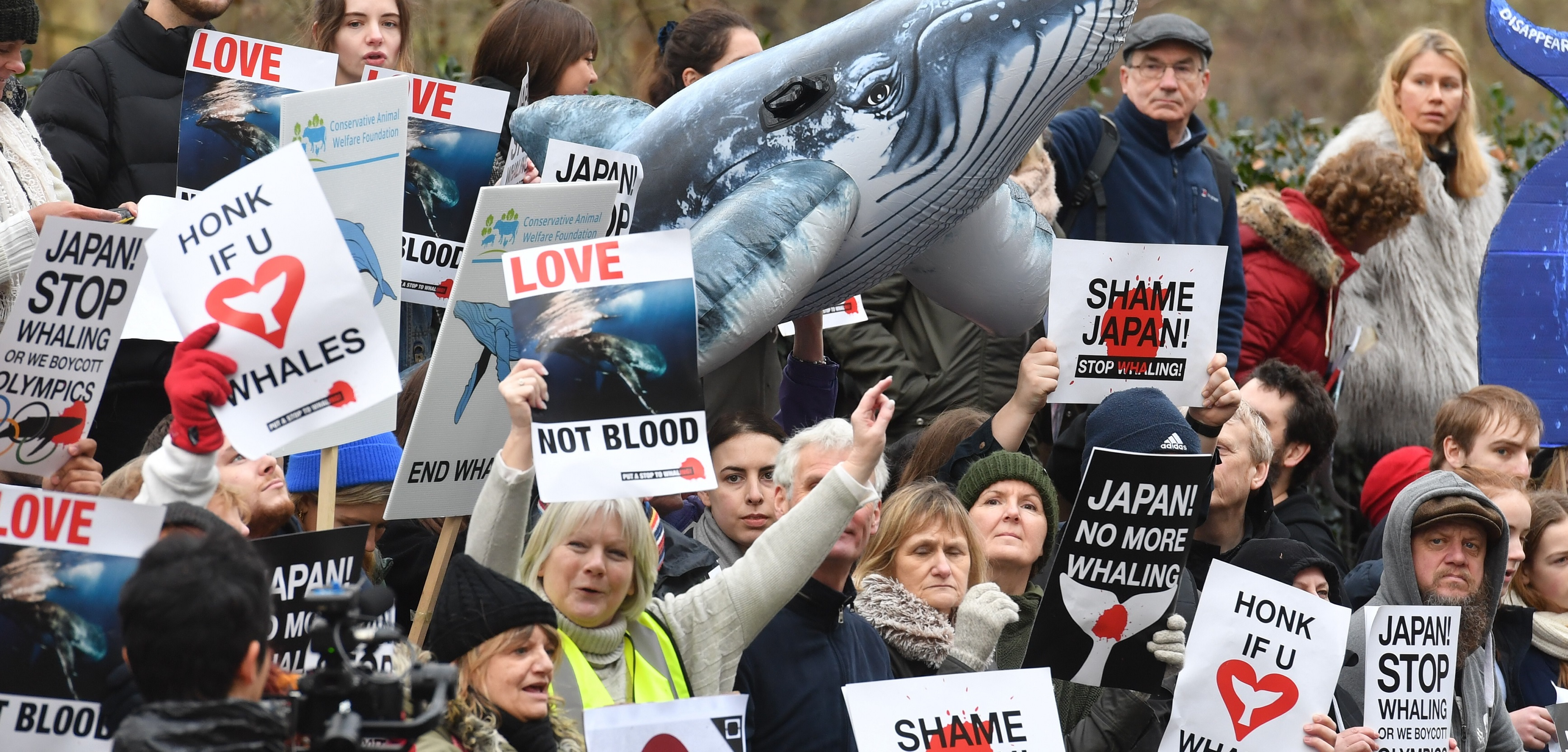 Whaling protest