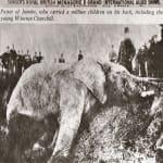 Jumbo-the-Elephant-001