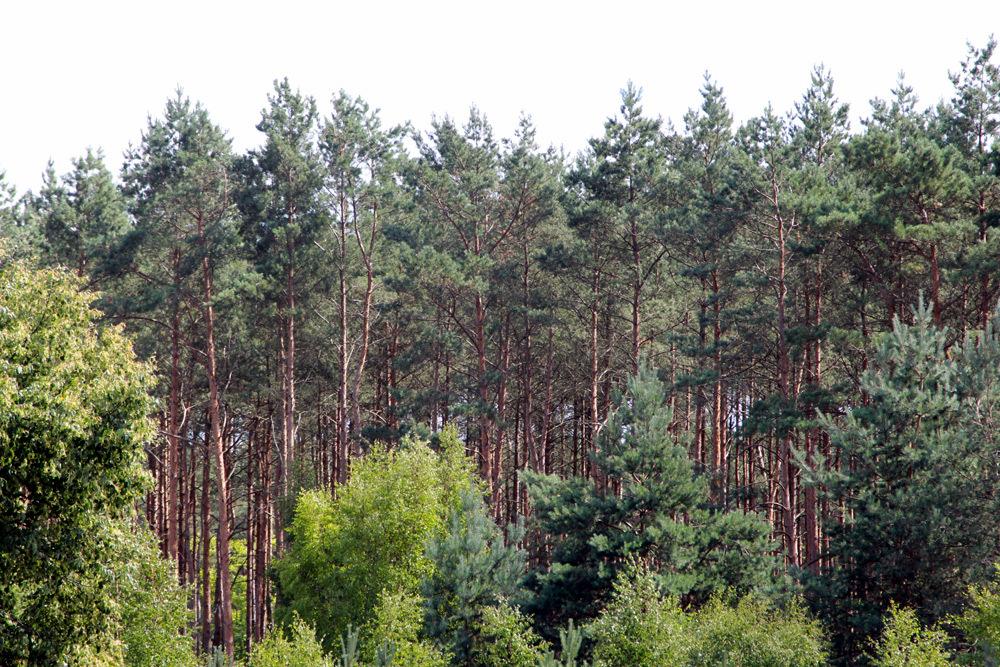 Szczecin Rural Woods