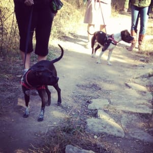 Leash Gremlins Need Love Too: Help for Leash Reactive Dogs - Dog