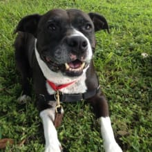 10 Moments for Austin Dogs That Make Us Thankful