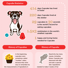 Cupcake: A Review of the World's Greatest Dog