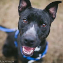 Needs an Experienced Adopter?
