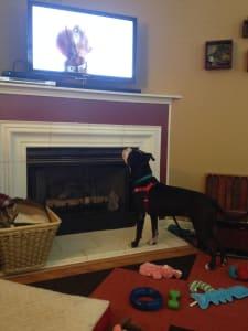 saul watching tv